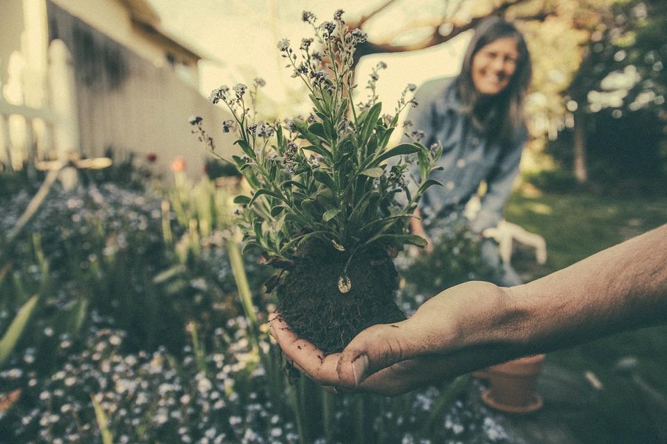 Le rêve de tout jardinier